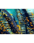 Lenti macro subacquee per ingrandire piccoli soggetti